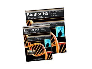 A8805, MTC BIO BluBlot™ HS Autoradiography film, 8x10in, 100 sheets/box - BX - MTC Bio - ELECTROPHORESIS AND WESTERN BLOT